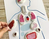 Montessori Internal Organs Matching Game