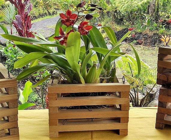 wood hanging baskets wooden orchid baskets handmade wood