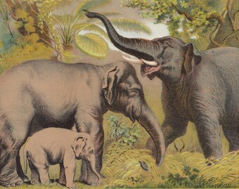 Asian Elephants with Baby Elephant Wildlife Animals Antique Lithograph 1880
