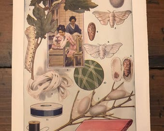 Antique Print - Silkworm, Silk Manufacturing, Cocoons, Unspun Silk - Lithograph (C046)