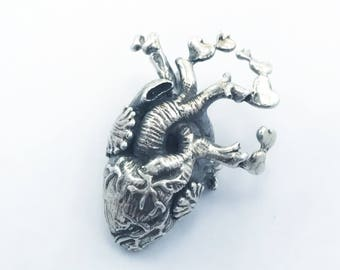 Anatomy Heart