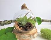 Nature Air Plant Terrarium Kit / Hanging Glass Air Plant Terrarium with Moss and Wood