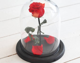 Beauty and the beast rose (Medium), Mother's day gift, Enchanted Rose, Rose in glass dome, Forever red rose, Rose in Glass, preserved rose