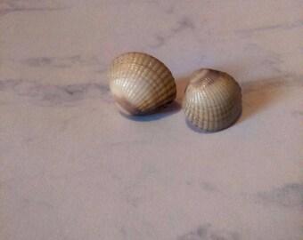 Real English Sea Shell Stud Earrings - Beach, Shells, Nature, Genuine, England, Sea side