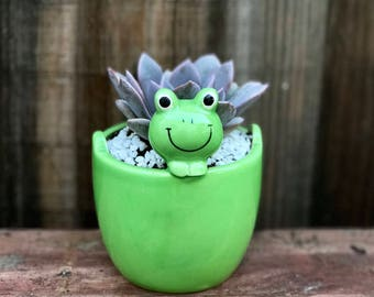 Cute Peek-a-boo FROG succulent planter (PLANT INCLUDED) - Adorable green ceramic planter