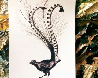 Lyre Bird - Signed A4 Art Print of Charcoal Artwork