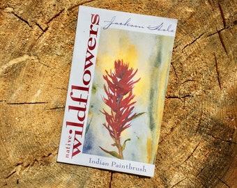 Indian Paintbrush Wyoming Wildflower Seeds