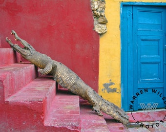 Fine Art Photography | photograph | alligator | Cuba | vibrant colors | travel | reptile | taxidermy | stuffed animal | climbing steps
