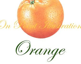 Orange - Kitchen Collection Trio - Pointillism - Color Ink Pen - Print