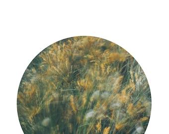 Beach Grass, Printable Art, Nature Photograph, Art Print, Nature Print, Nature Photography, Digital Download