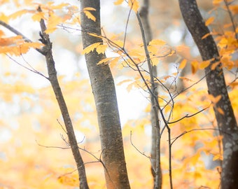 landscape photography trees woods Autumn nature photography wall decor