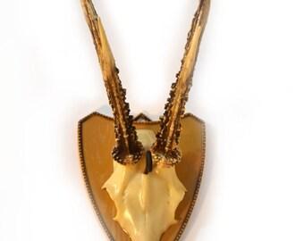 Plastic Gazelle Head with Horns