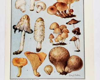 Vintage Mushroom Prints (2) * handpainted * Mary Eaton * edible mushrooms * inedible mushrooms * nature art * fungi