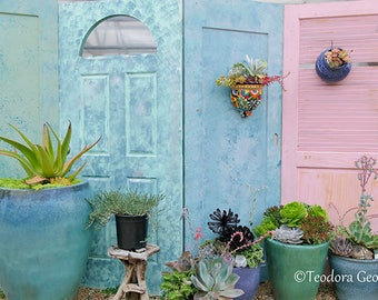 Pink and Blue Doors Photography, Still Life, Garden Photo, Succulent Plants