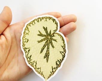 Begonia Leaf Sticker | Vinyl Sticker | Vintage Sticker | Laptop Sticker | Outdoor Sticker | Leaf Decal | Waterbottle Sticker Yeti