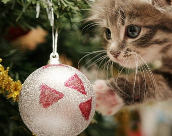 Christmas Tree Protection, Cat Repellent, Cat Scratch, Natural Cat Repellent,  Cat Deterrent