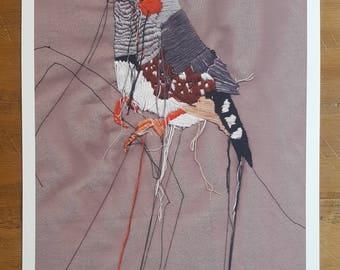 Zebra Finch Print