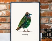 PRE ORDER Starling A3 Print - illustrated bird - murmuration - DP20A3