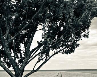o.T. (landscape #15)