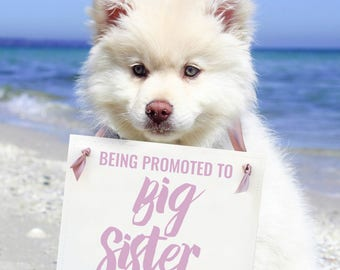 Being Promoted To Big Sister Sign | Pregnancy Announcement For Dog or Kid | New Baby Social Media Photo Shoot Prop 1456 BB