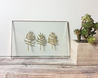 Real Pressed Flower Floating Frame - Glass Wall Art - Silver Dusty Miller Trio