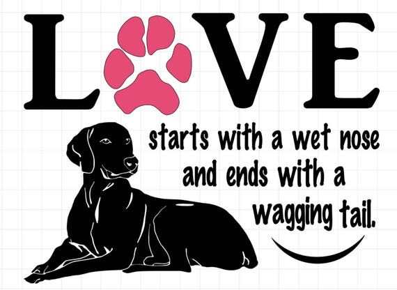 WEIMARANER  wall decal | Love begins with a wet nose and ends with a wagging tail | Free Shipping