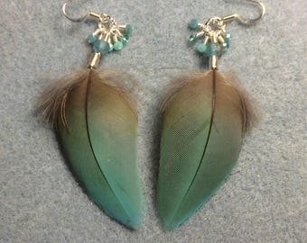 Turquoise macaw feather earrings adorned with tiny dangling turquoise Chinese crystal beads.
