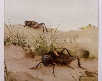 Field Cricket Detmold Art Print Lithograph Book Plate Edwardian Illustration Home Office Childs Decor Locusts Bugs Fabre's Insect Dorm Room
