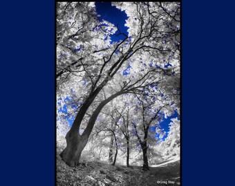 Oak Forest 1, Infrared Fine Art Photography, Metallic Paper  / Metal Print