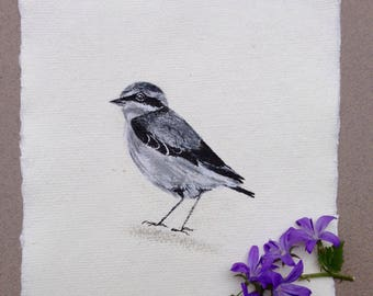 Wheatear, Original Ink Drawing