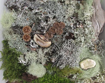 Dried Moss and Lichens Forest Product for Terrariums, Fairy Gardens, Crafts, Wedding Decor, Floral Supply, Woodland Wedding Centerpieces