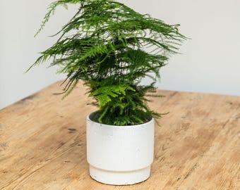 Textured White Scandi Style Planter