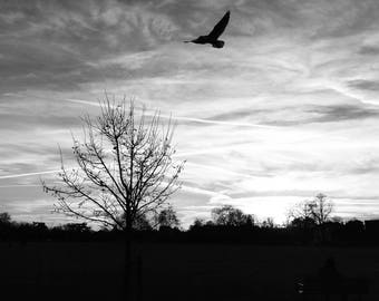 Black And White Print, Bird In Sky Print, Nature Wall Art, Nature Photography, Nature Print,  Nature Art Print, London Photography, Sky Art