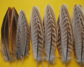 FG (- set of feathers pheasant-12/14cms 6paires-(FG8))