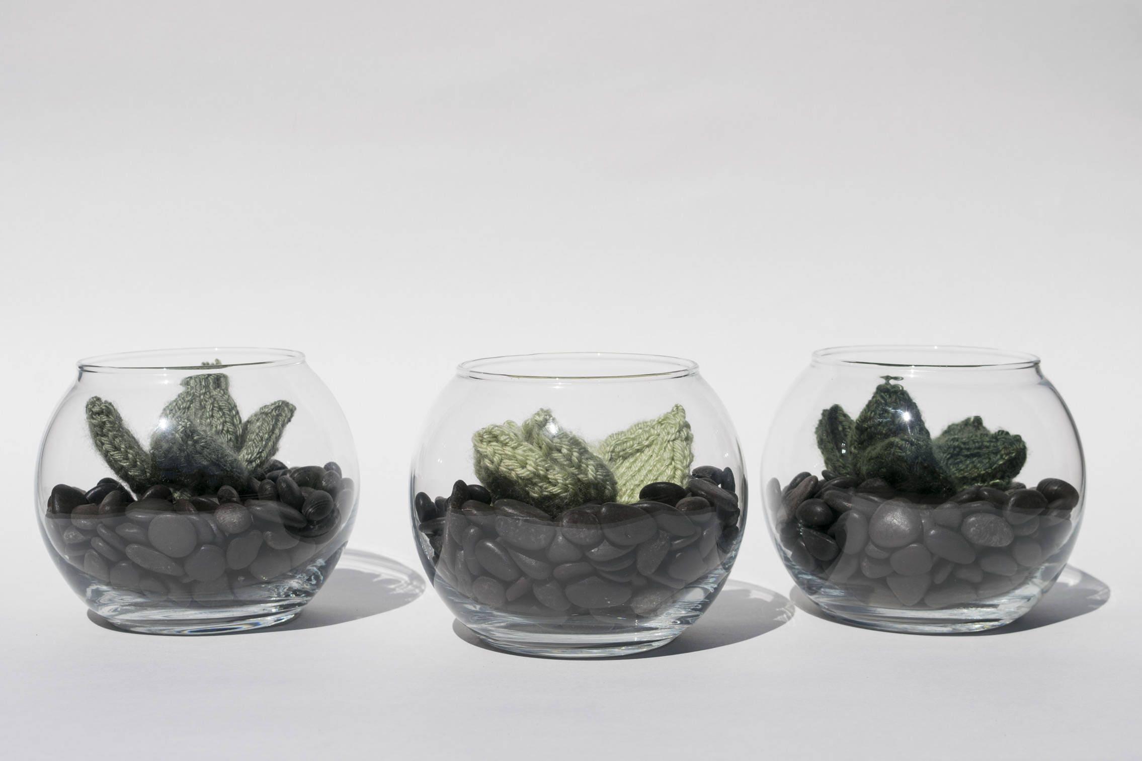 La bulle cactus plante en laine dans un petit terrarium - Petit terrarium ...