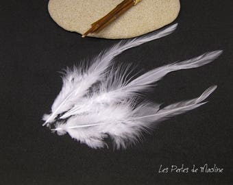 Set of 2 feathers natural - white - 10-15 cm