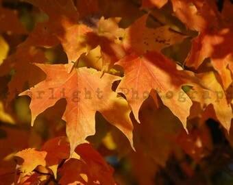Seasonal Photograph, Fall Leaves, Home Decor Photography, Country Living,