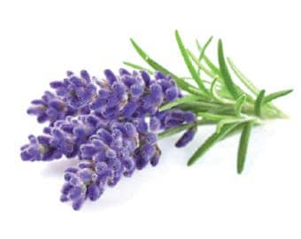 LAVENDER FRAGRANCE OIL. 1 fl oz. Concentrated, Skin Safe for Soap, Lotion, Candles etc.