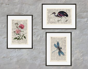 Prints - set of 3 - COLOURFUL NATURE - Antiquarian Book page