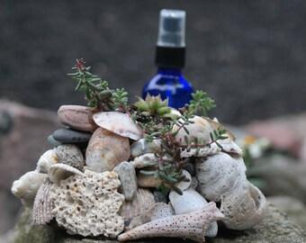 Sand, Shell & Stone Succulent Planter