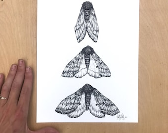 Moth Rising, Archival 8x10 Print on 140lb Watercolor paper, featuring crisp reproductions of three hand drawn moths, hand-signed by artist