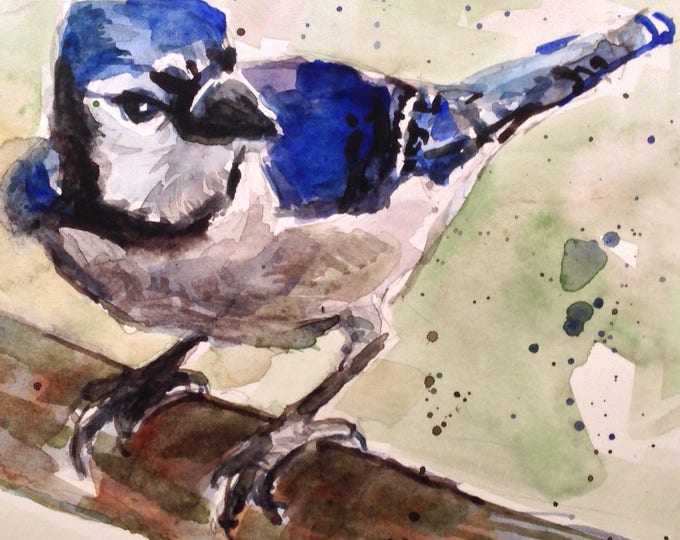 5 x 5 inch Blue Jay Original Watercolor, unframed, under 60 dollars, Brande Arno Painting