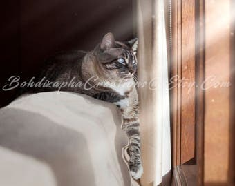 Animal Cat Photography Wall Art in Canvas, Metal, or Photo Paper Print; Cat in Sunrays