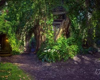 fairy Forrest,digital background,fairy-tale,children's backdrops,