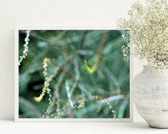 Downloadable prints Emerald green wall decor Printable nature photography Picture for bedroom 8x10 print Digital download Green art decor