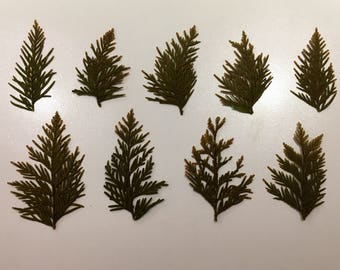 9 piece dried pine leaves