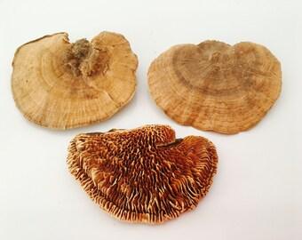 Dried mushrooms 5pcs - terrarium - mushroom - plant