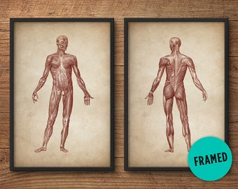 Framed anatomy print set of 2, Framed art, Anatomy posters, Anatomy home decor, Anatomy illustrations, Large print, Human muscle system
