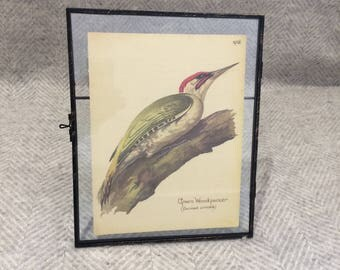 Genuine vintage framed botanical drawing, flower illustrations, botanical print, floral, in glass frame, bird green woodpecker