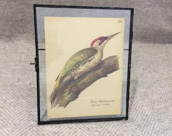 Genuine vintage framed botanical drawing, flower illustrations, botanical print, floral, in glass frame, bird green woodpecker